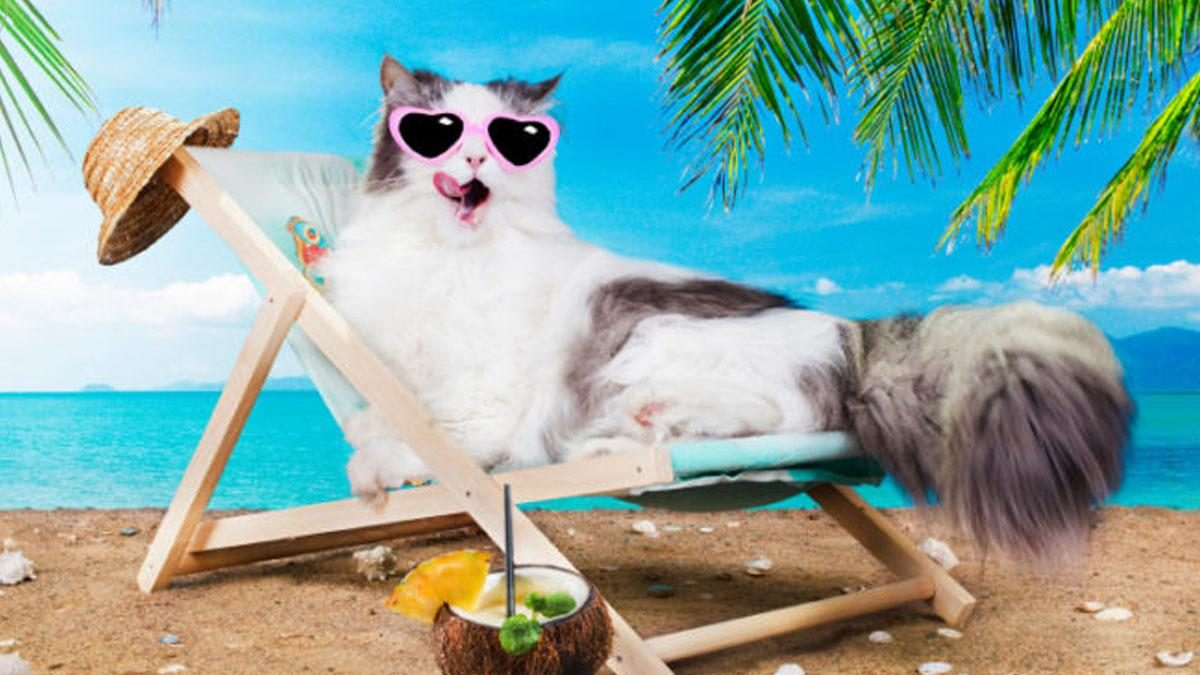 How To Keeping Cat Cool in Summer